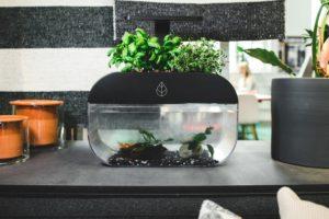 Las nuevas alternativas en el cultivo del pescado