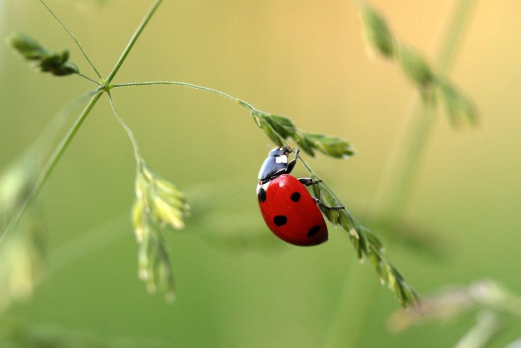 ¿Un insecto para comer?