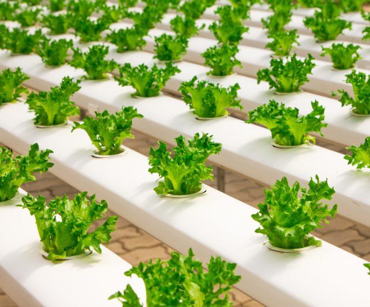 Métodos de cultivo alternativos